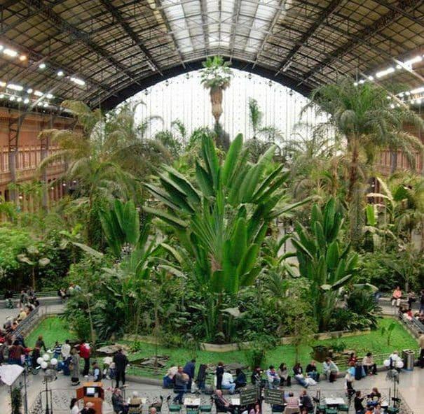 jardin-tropical-de-la-estacion-de-atocha_1057321