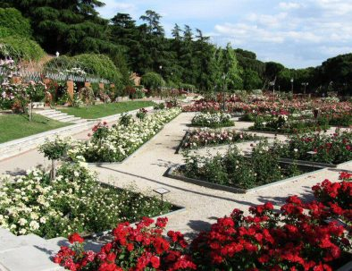 rosaleda-del-parque-del-oeste_3681391