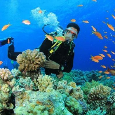 gran canaria plongée sous-marine