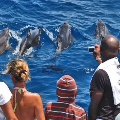 gran canaria observation des dauphins